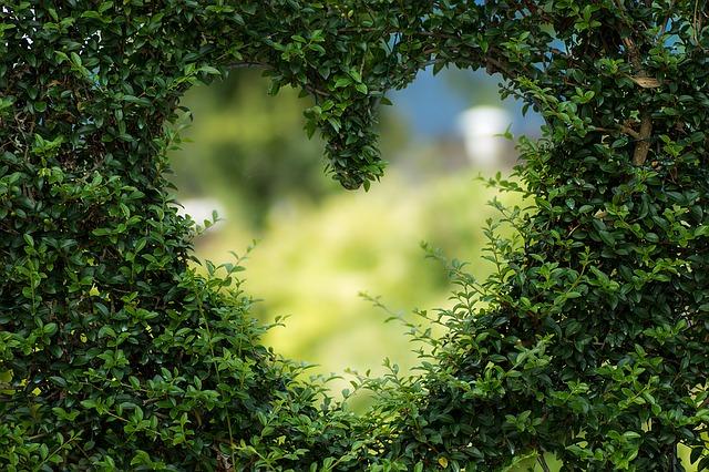 jak dbać o serce